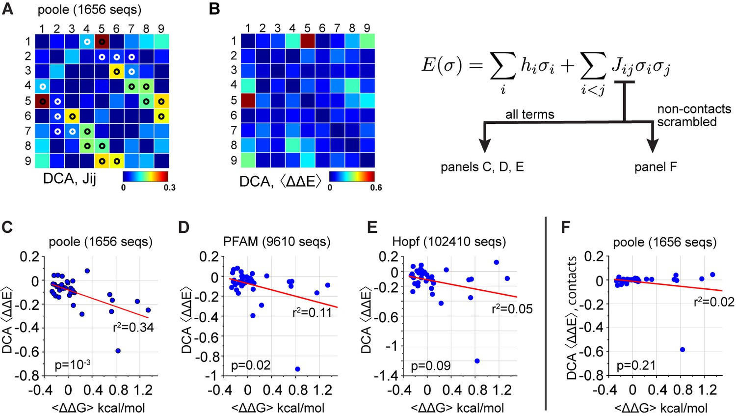 Coevolution-based inference of amino acid interactions