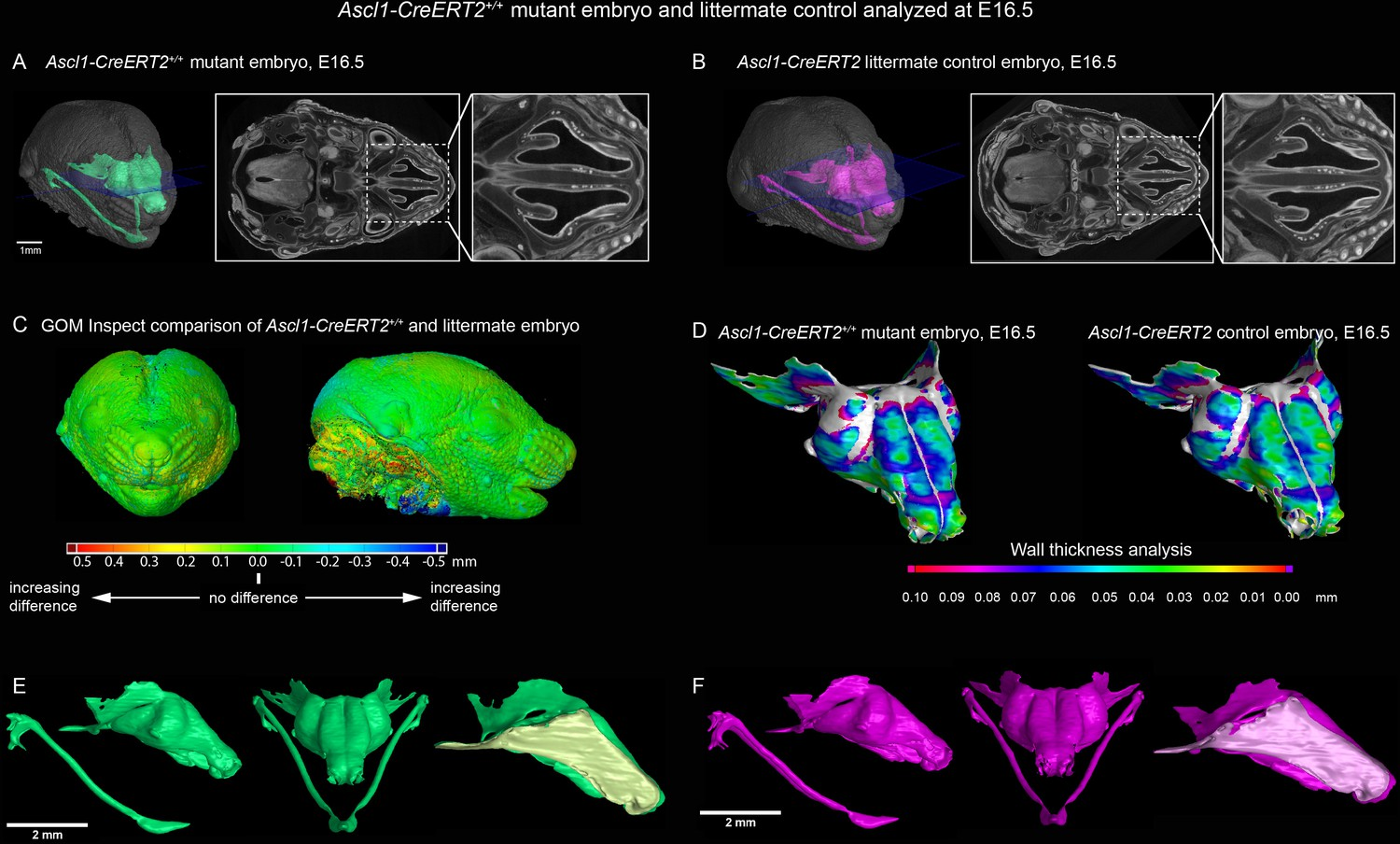 Signals from the brain and olfactory epithelium control