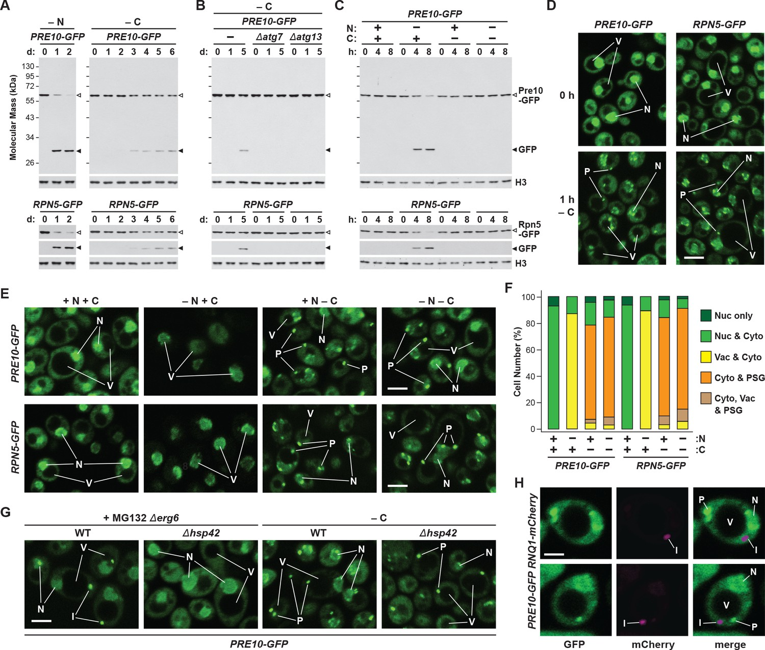 Proteasome storage granules protect proteasomes from autophagic