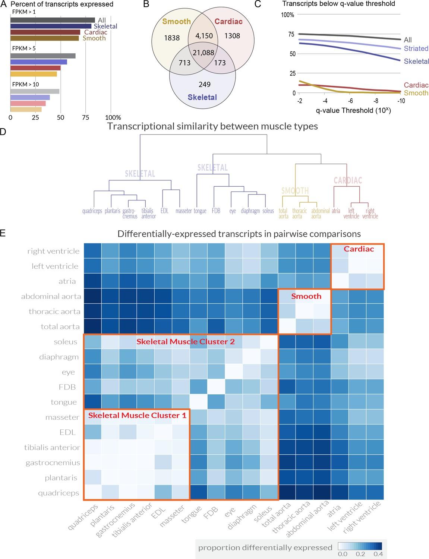 Gene Expression Patterns May Underlie >> Transcriptional Profiling Reveals Extraordinary Diversity Among