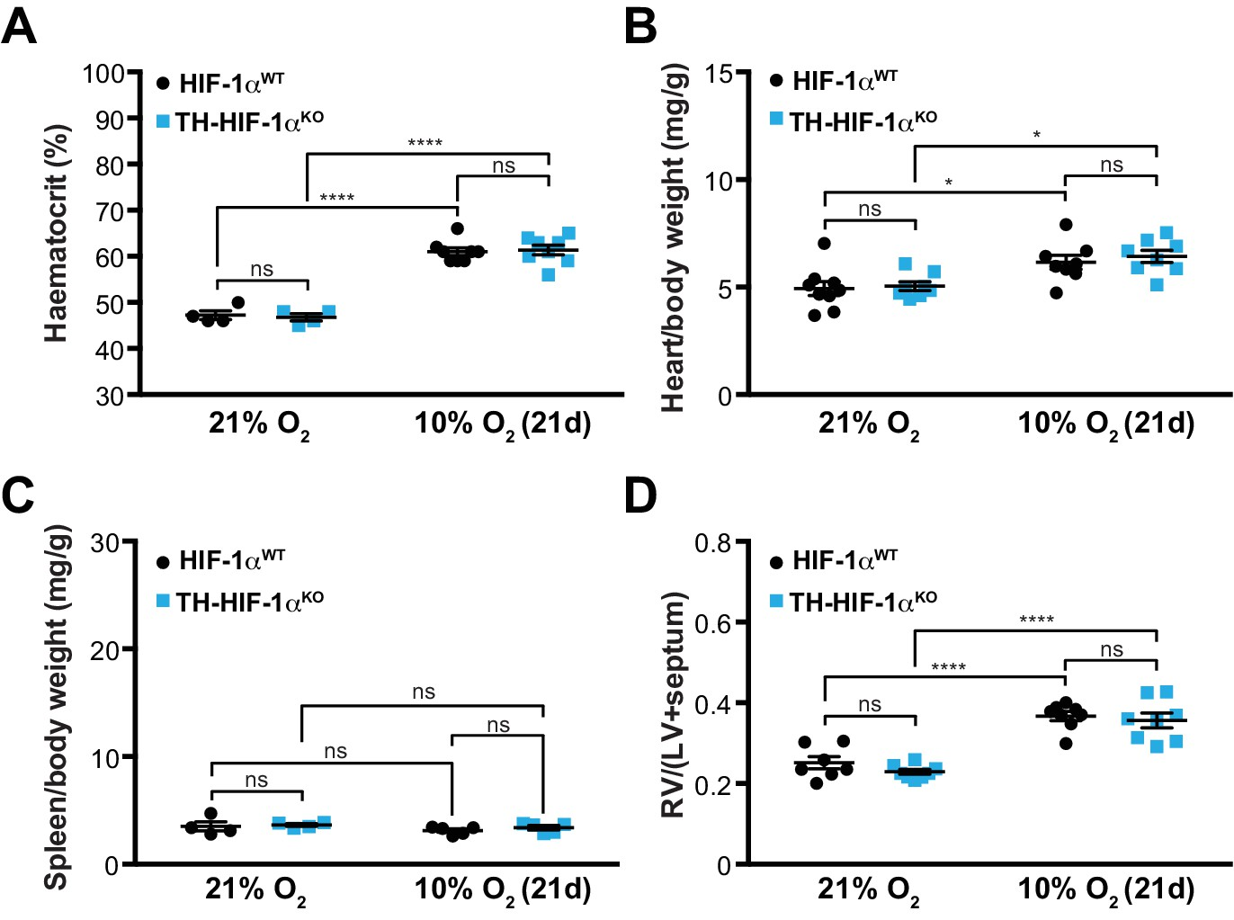 HIF-2α is essential for carotid body development and function | eLife