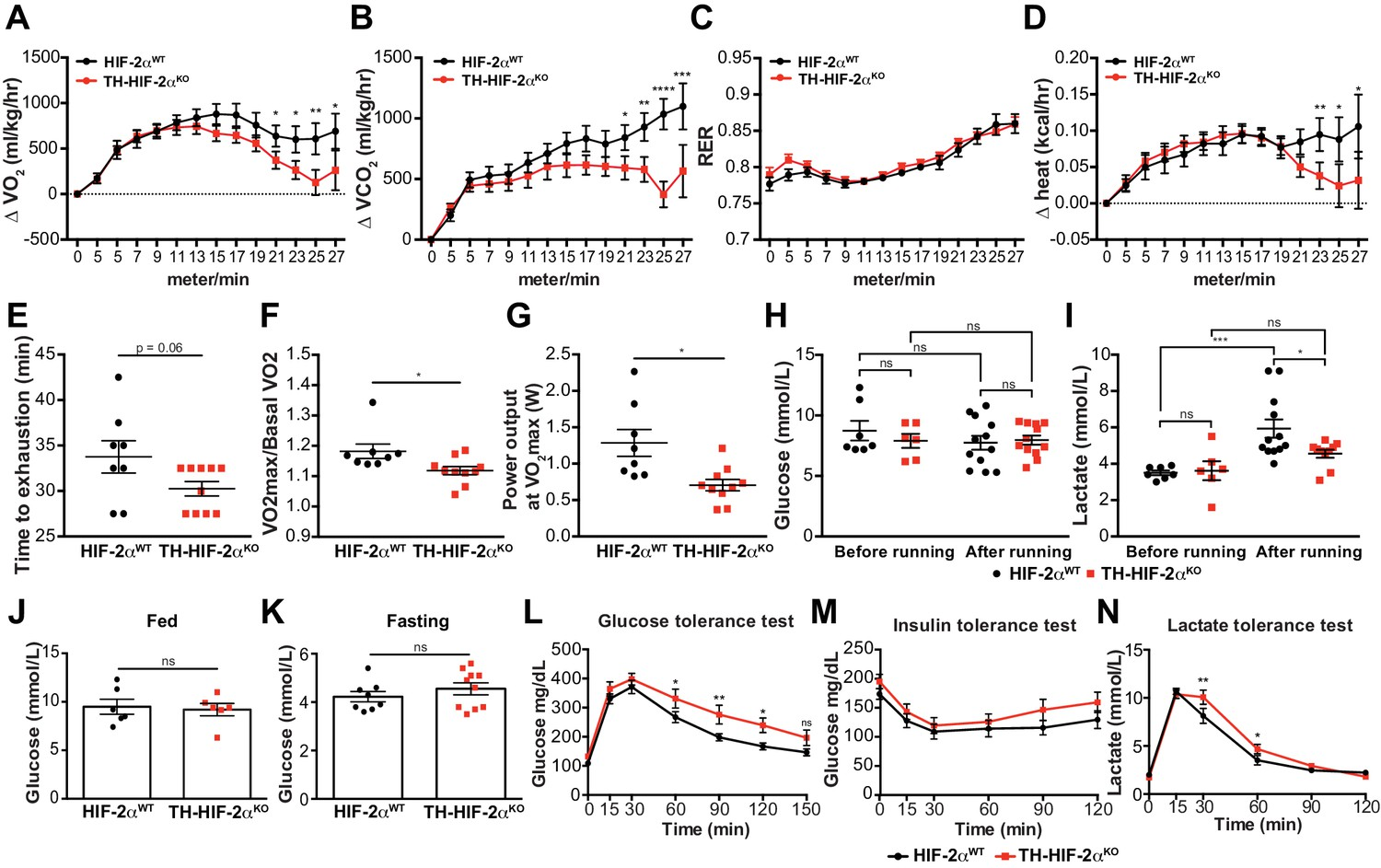 Hif 2 Is Essential For Carotid Body Development And Function Elife Computer Mouse Management On A Success Diagram Stock Image Exercise Performance Glucose In Mice Lacking Cbs