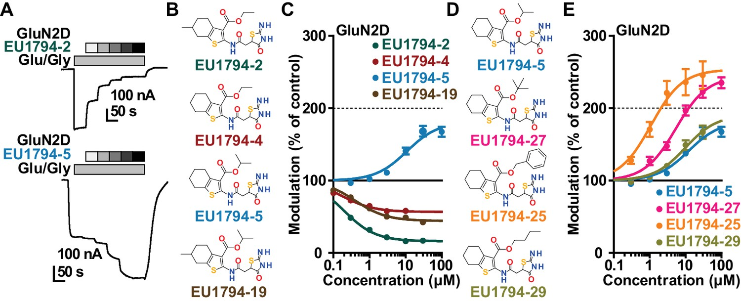 An NMDAR positive and negative allosteric modulator series