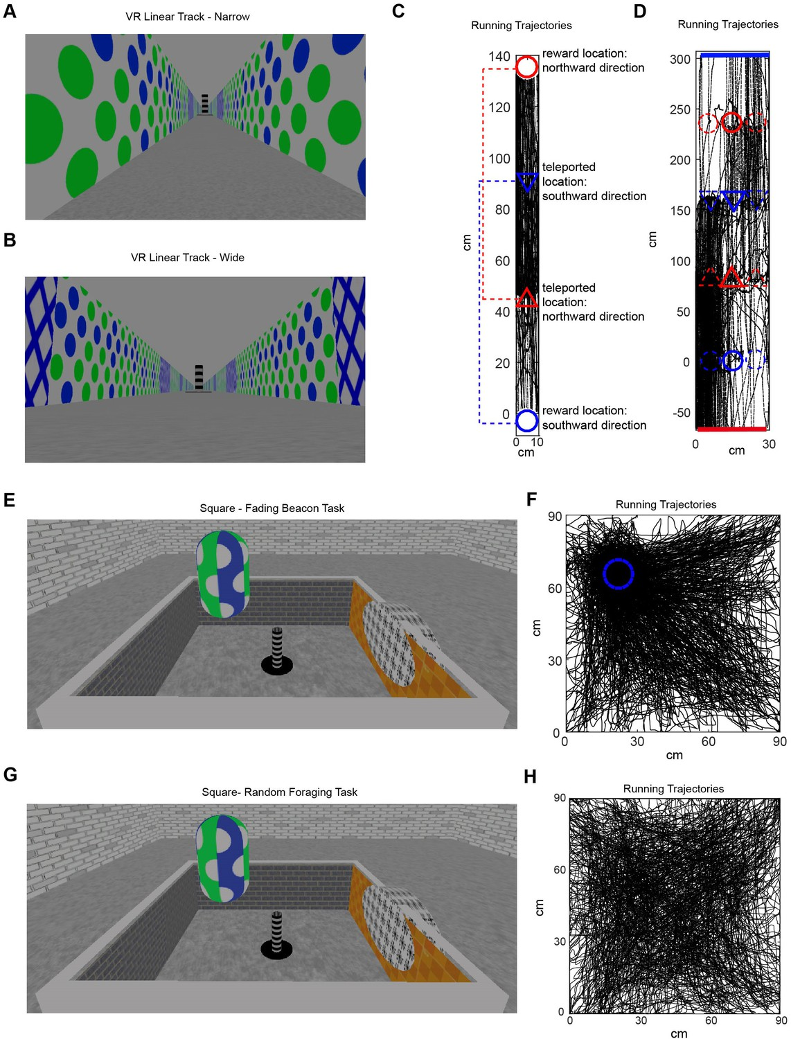 4dfd76d7165 Spatial cell firing during virtual navigation of open arenas by head ...