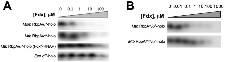 Fidaxomicin jams Mycobacterium tuberculosis RNA polymerase motions