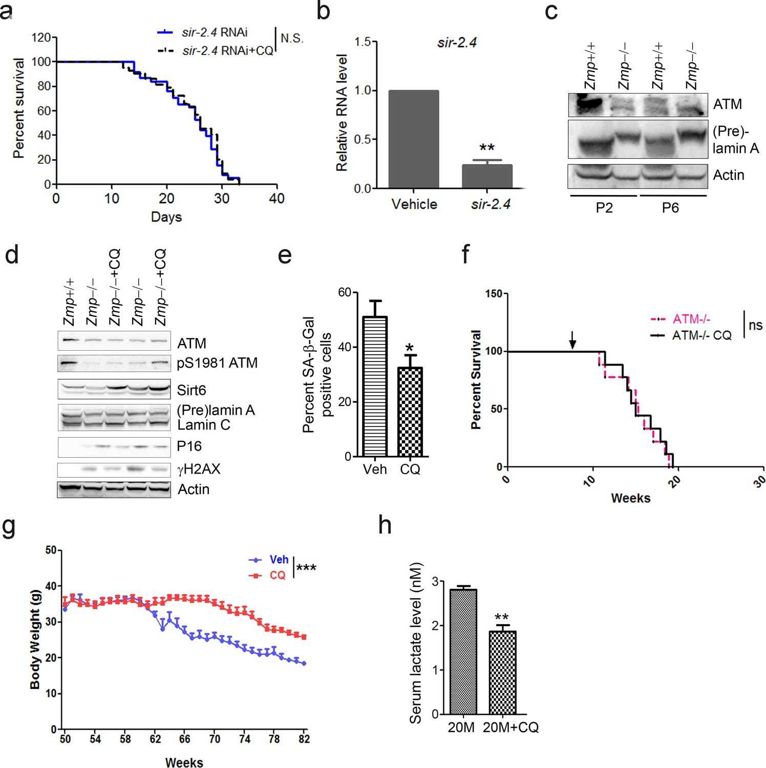Boosting Atm Activity Alleviates Aging And Extends Lifespan In A Likewise Led Driver Circuit Diagram Besides White Activation Ameliorates Associated Features