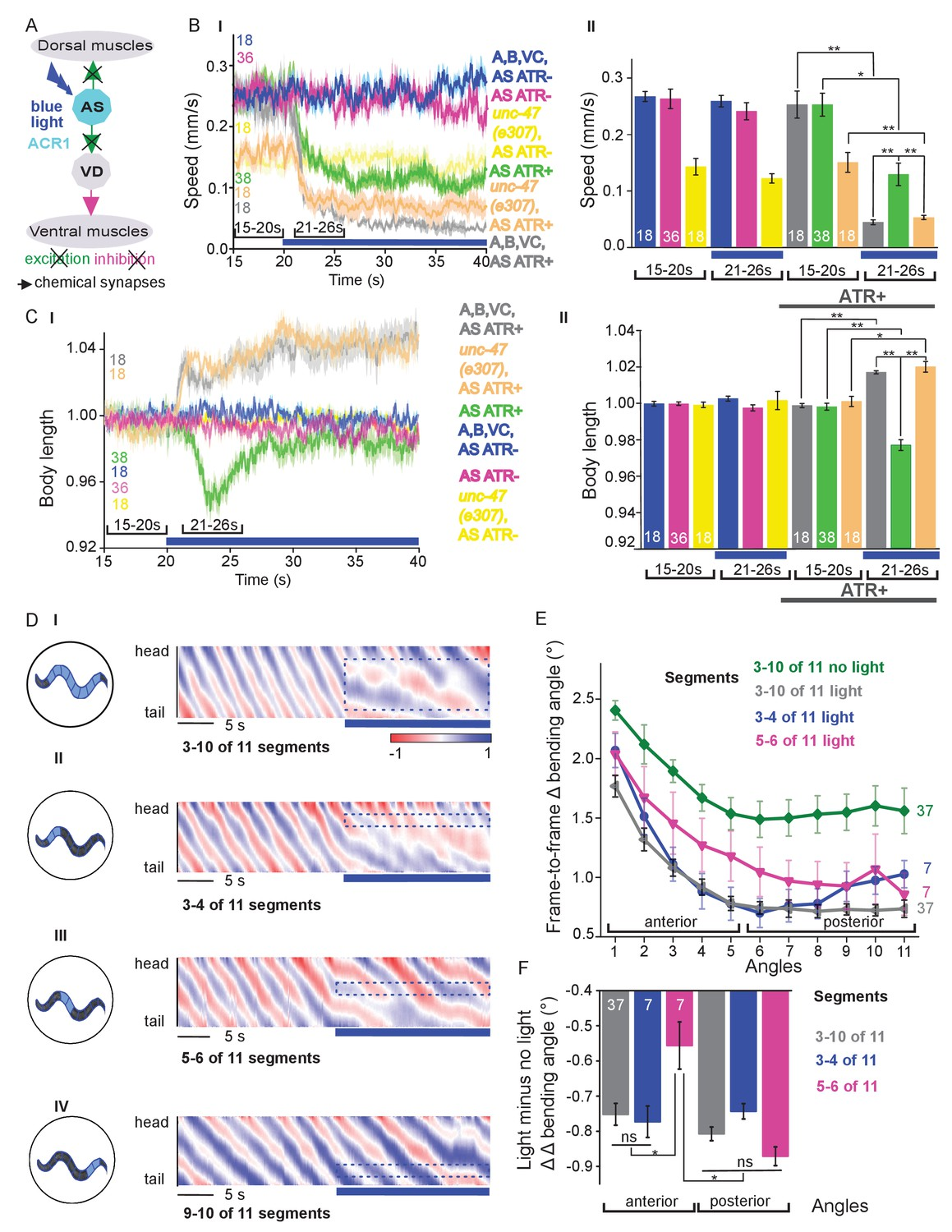 Functionally asymmetric motor neurons contribute to