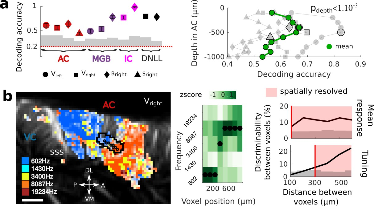Multi-scale mapping along the auditory hierarchy using high