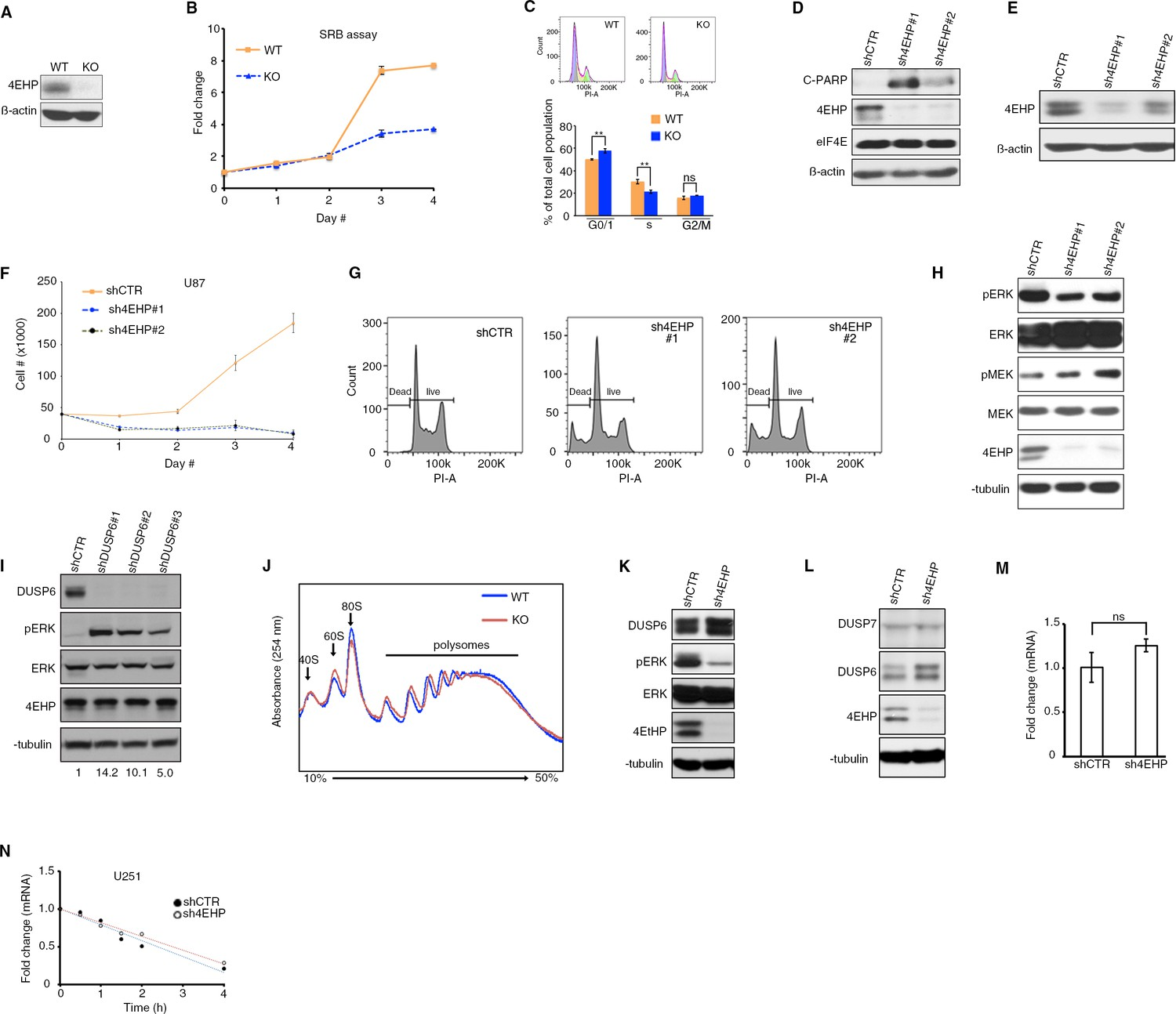 Translational Control Of Erk Signaling Through Mirna 4ehp Directed Likewise Led Driver Circuit Diagram Besides White Cell Proliferation And Regulation Dusp6 Expression Is Affected By Depletion