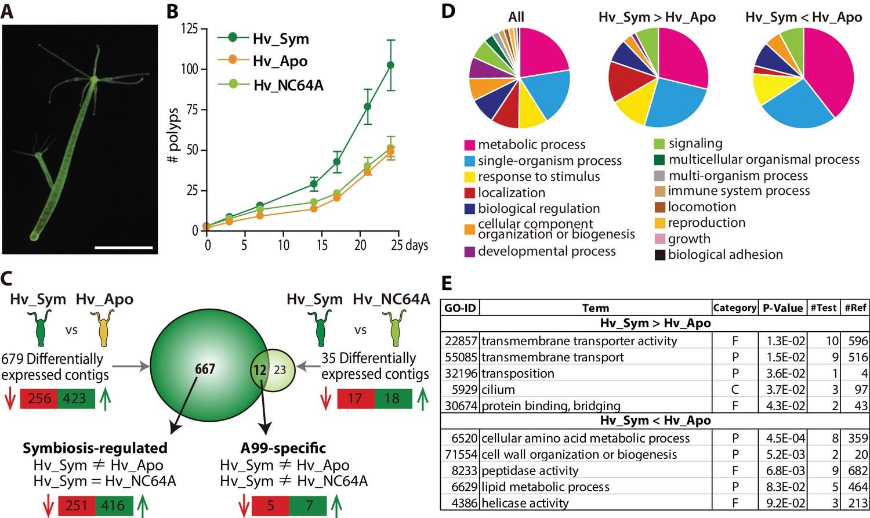 hydra genome project