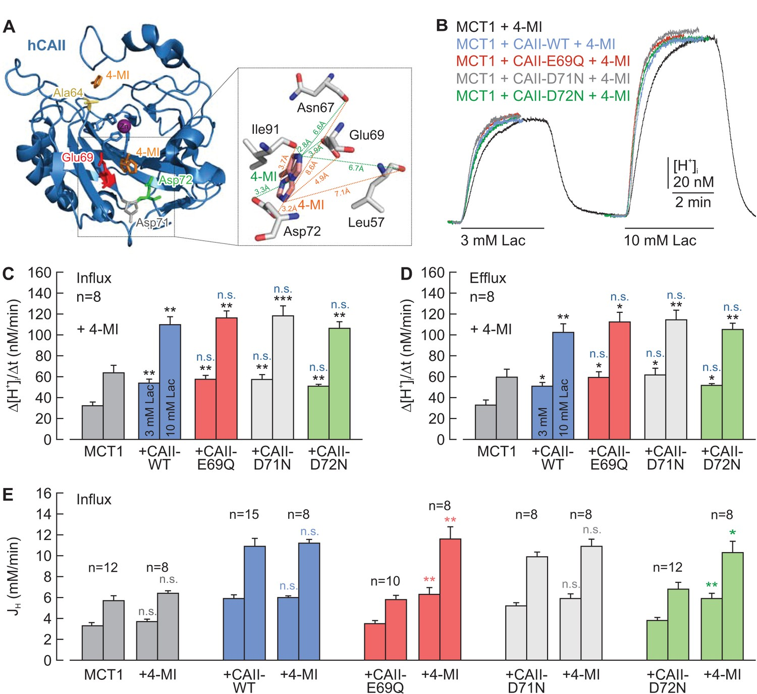 A Surface Proton Antenna In Carbonic Anhydrase Ii Supports Lactate Mallory 685 Wiring Diagram Chemical Rescue Of The Interaction Between Mct1 And Caii E69q D72n By 4 Methylimidazole