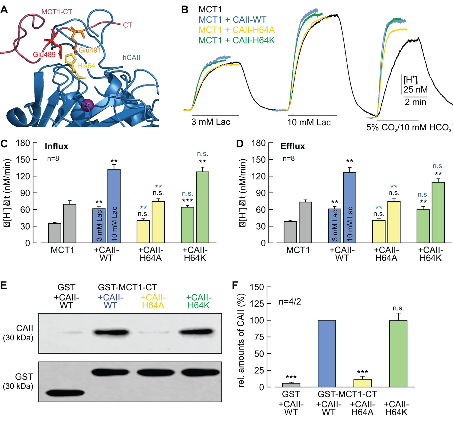 A Surface Proton Antenna In Carbonic Anhydrase Ii Supports Lactate Mallory 685 Wiring Diagram Caii His64 Mediates Binding But No Transfer Between Mct1 And