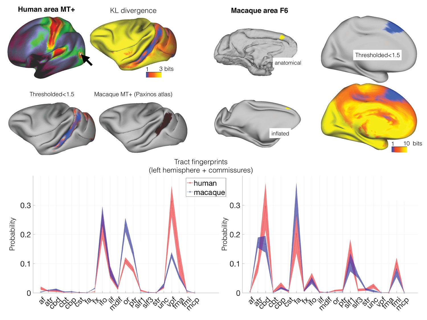 Whole Brain Comparative Anatomy Using Connectivity Blueprints Elife