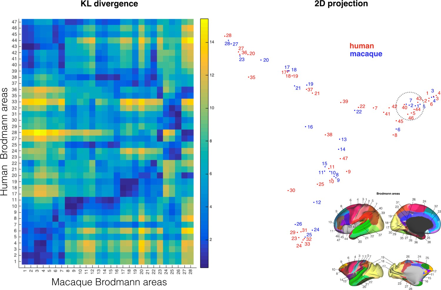 Whole Brain Comparative Anatomy Using Connectivity Blueprints Elife Electric Circuits And Fields Nuffield Foundation Comparing Cortical Atlases Across Species