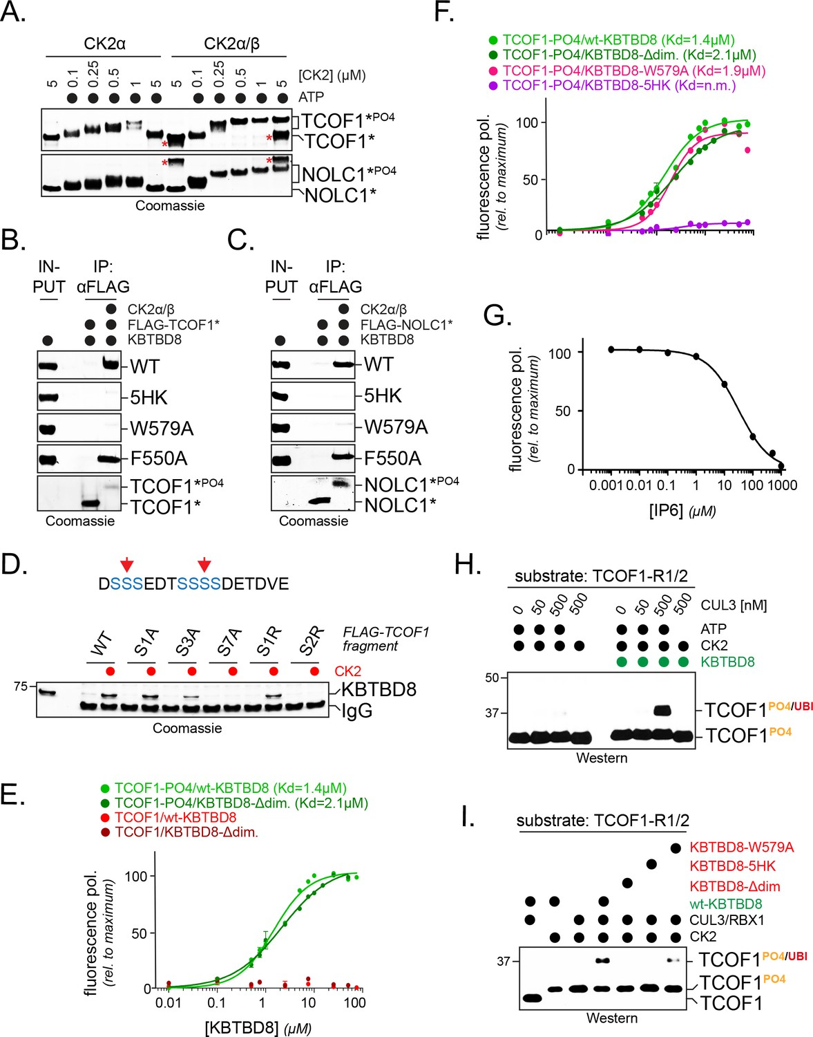Multisite dependency of an E3 ligase controls