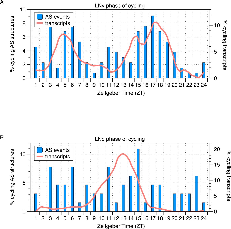 Striking circadian neuron diversity and cycling of