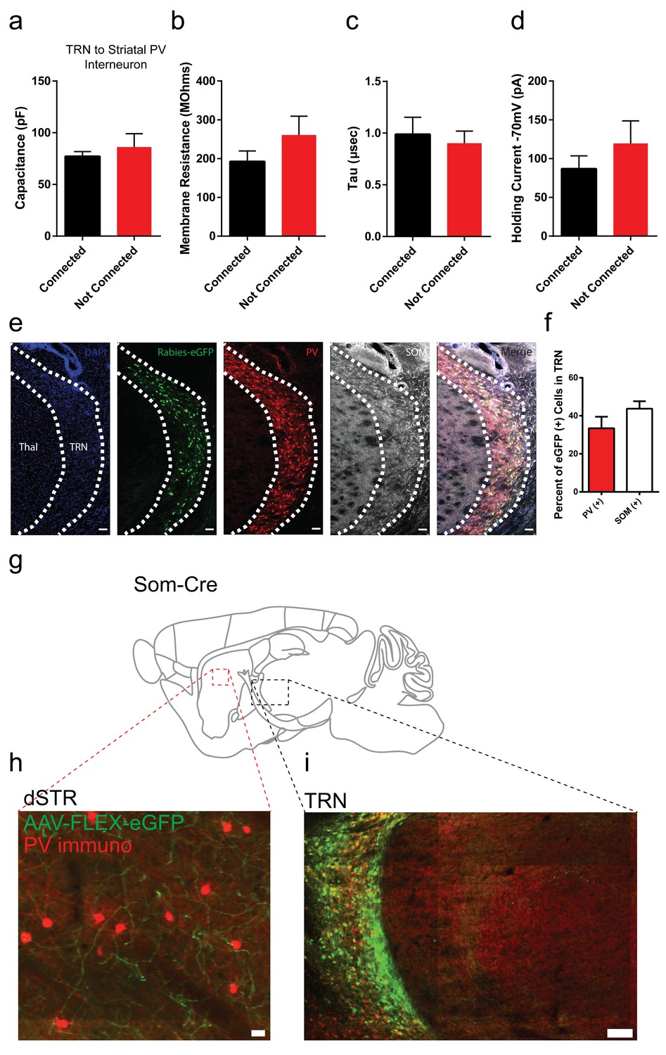 Differential Inputs To Striatal Cholinergic And Parvalbumin Cap Discharge Circuit O27 Switch Membrane Properties Of Pv Interneurons Are Similar Between Trn Connected Or Non Cells