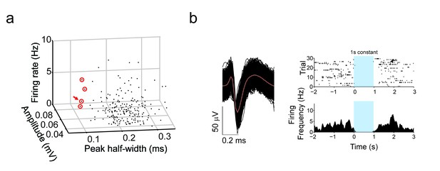 figures and data in differential inputs to striatal cholinergic and parvalbumin interneurons