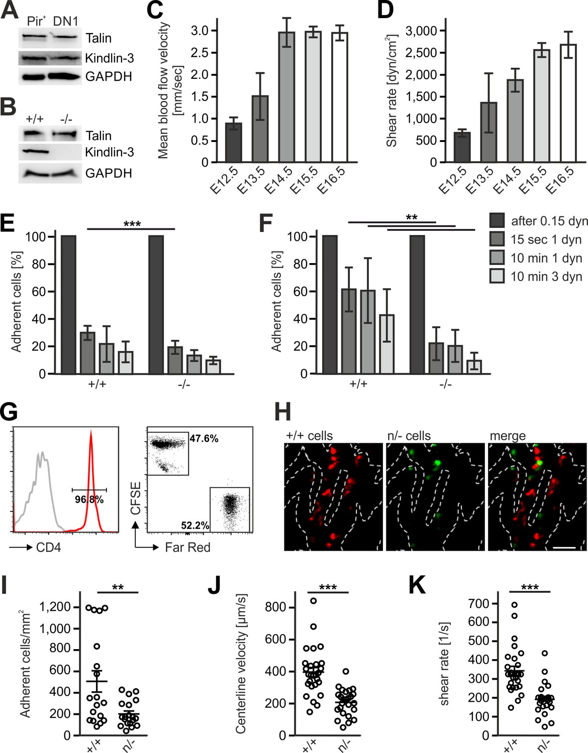 Differential requirement of kindlin-3 for T cell progenitor homing