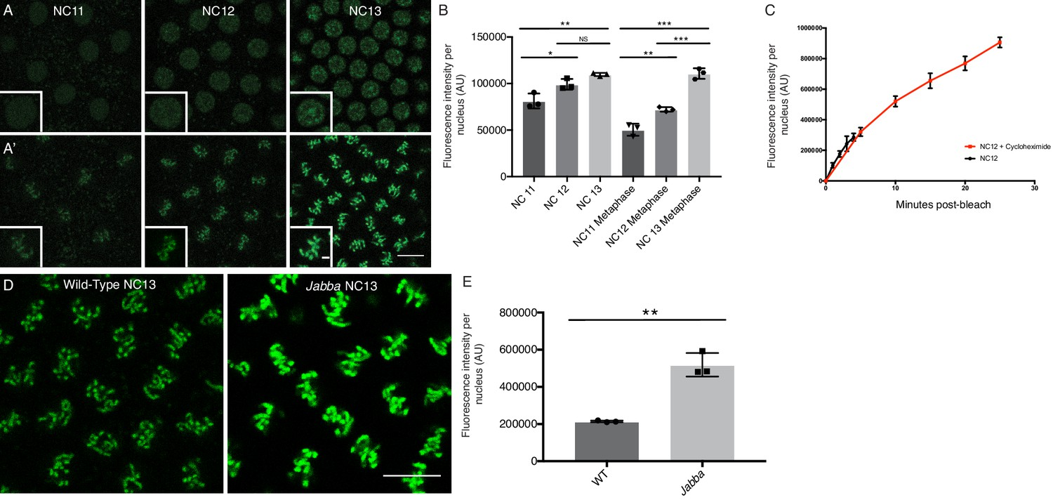 Developmentally Regulated H2av Buffering Via Dynamic Sequestration Lincoln Sa 200 Parts Breakdown Nuclear Is Chromosome Associated And Scales With Interphase Length