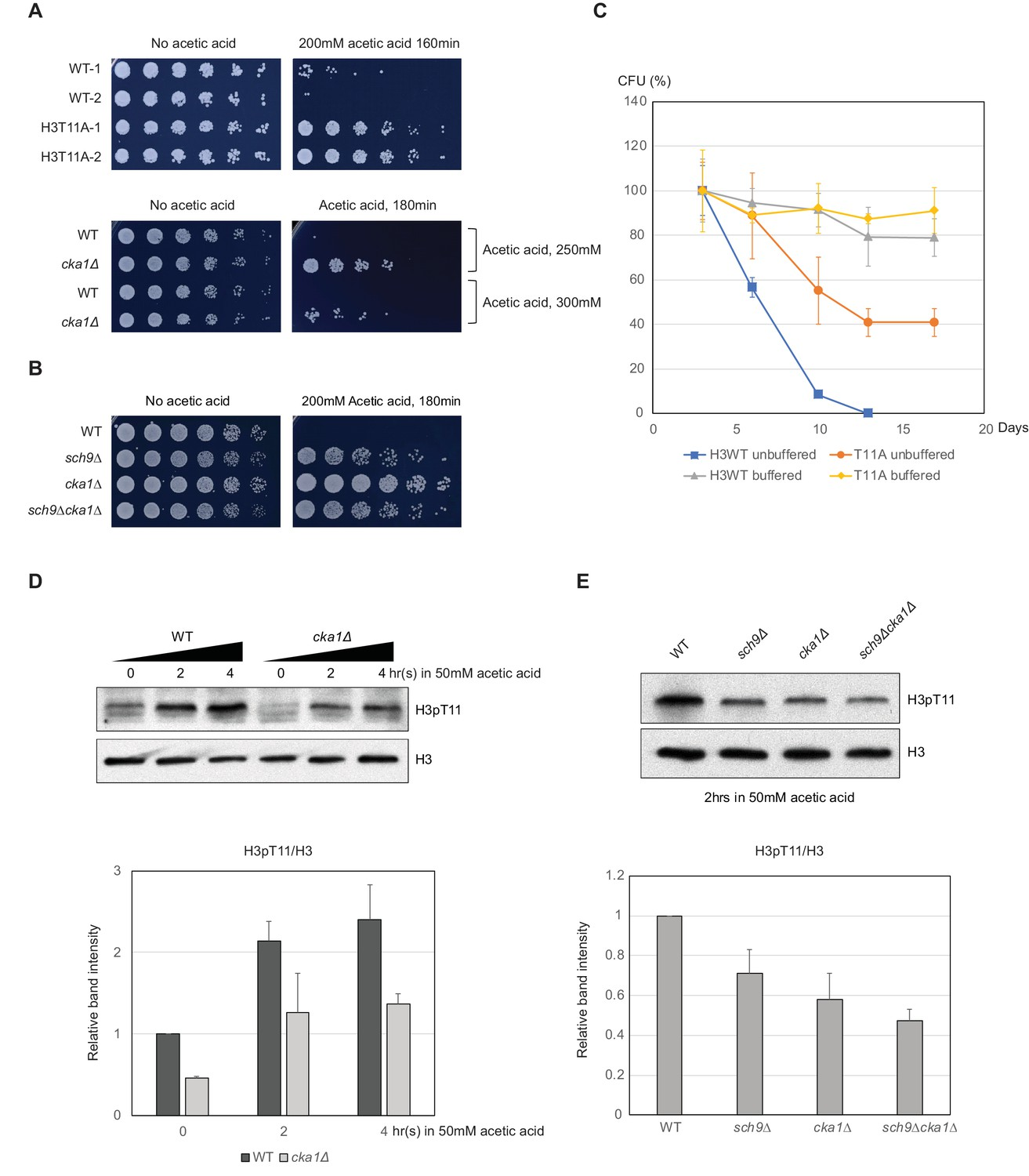 Histone H3 Threonine 11 Phosphorylation By Sch9 And Ck2 Regulates Electrical Panel Box Diagram For W219 H3pt11 Affects Cls Regulation Of Acetic Acid Resistance