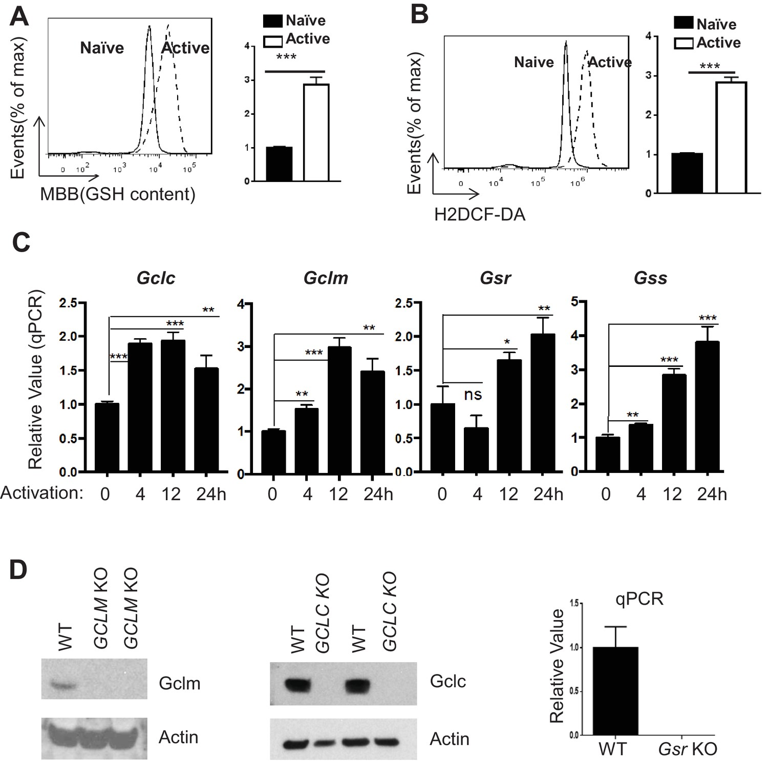 Glutathione De Novo Synthesis But Not Recycling Process Coordinates Fm Transmitter Block Diagram Eee Community Tcr Stimulation Drives Gsh And Ros Production In T Cells