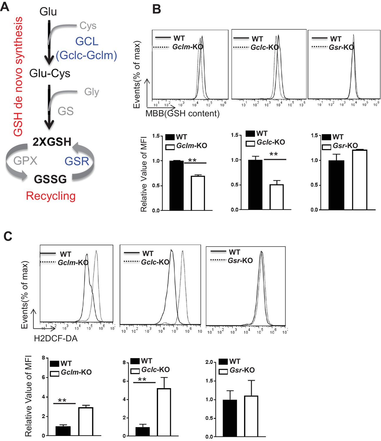 Herman Li Wiring Diagram Glutathione De Novo Synthesis But Not Recycling Process Coordinates Of Gssg Is Required For Producing Gsh And Fine Tuning Ros Upon Tcr Stimulation
