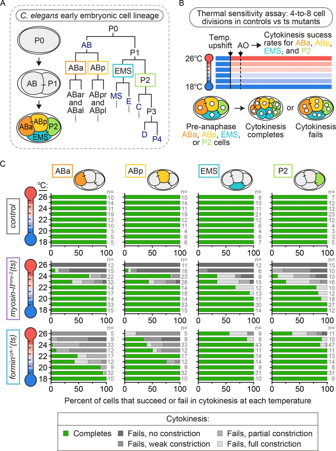 Cell-intrinsic and -extrinsic mechanisms promote cell-type-specific