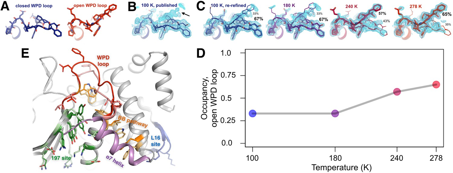 An Expanded Allosteric Network In Ptp1b By Multitemperature Intermediate Switch Wiring Diagram Pdf The Conformational Ensemble Of Active Site Wpd Loop And Allosterically Coupled Regions