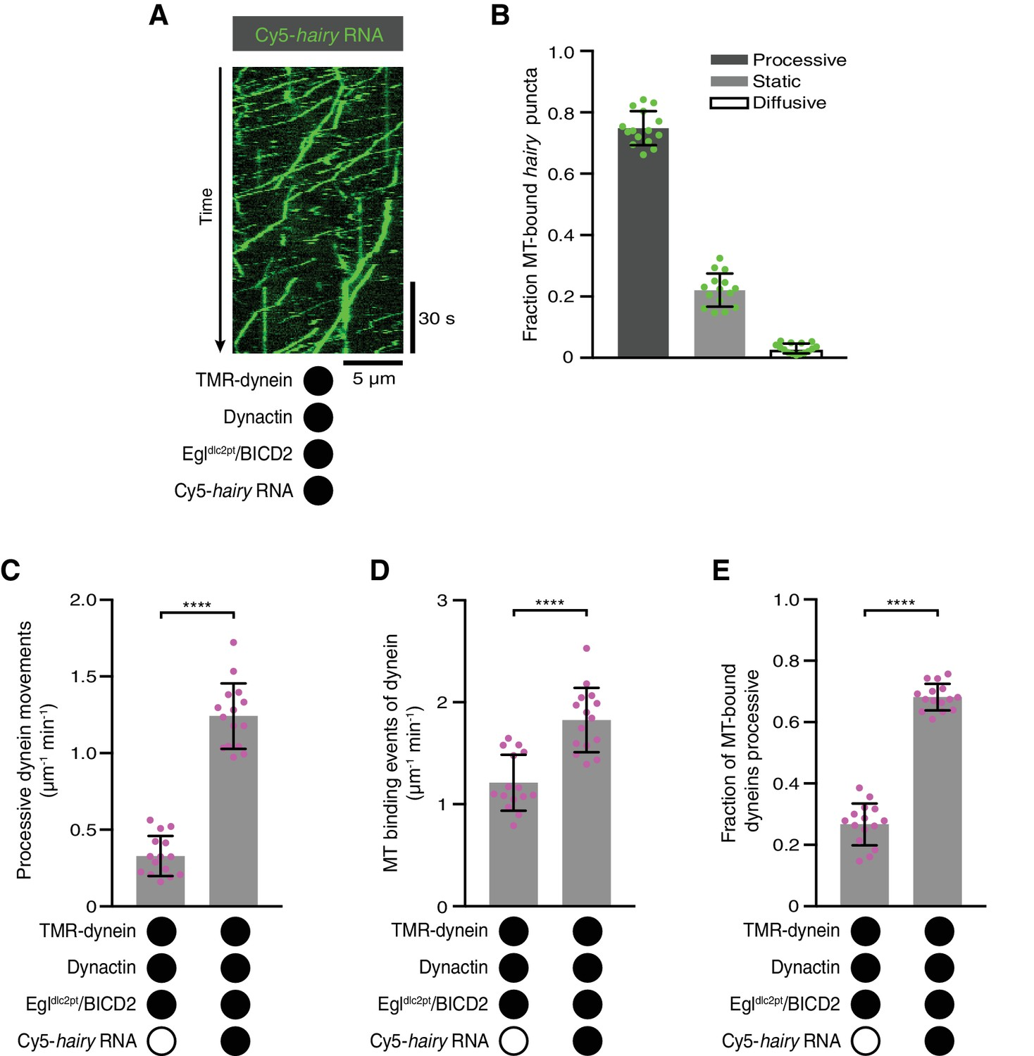 RNA-directed activation of cytoplasmic dynein-1 in