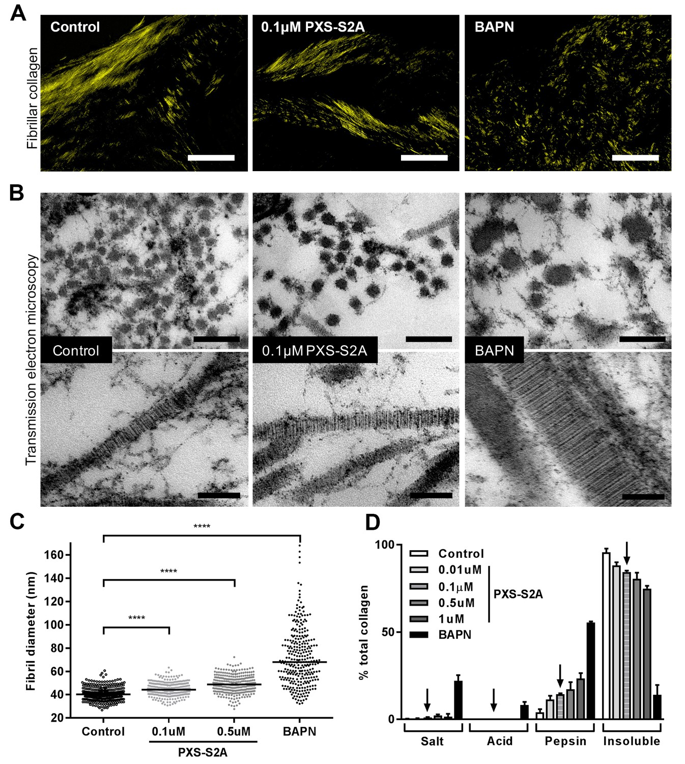 Nanoscale dysregulation of collagen structure-function