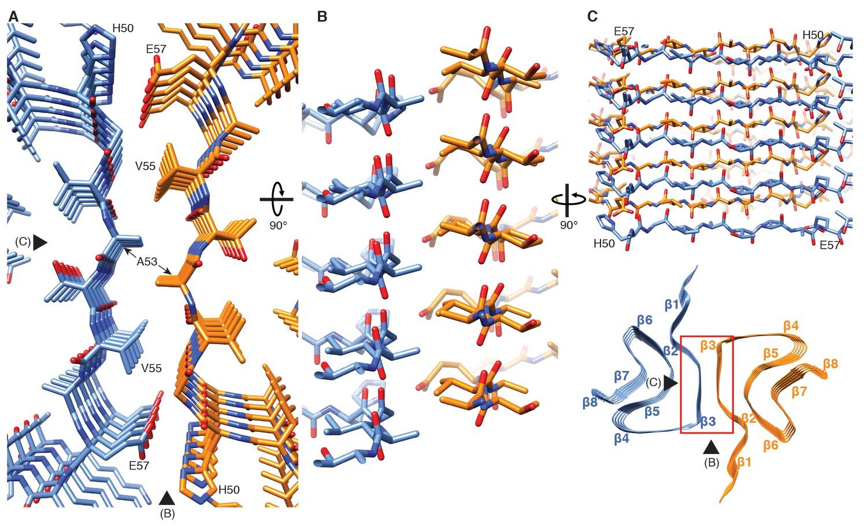 Cryo-EM structure of alpha-synuclein fibrils | eLife