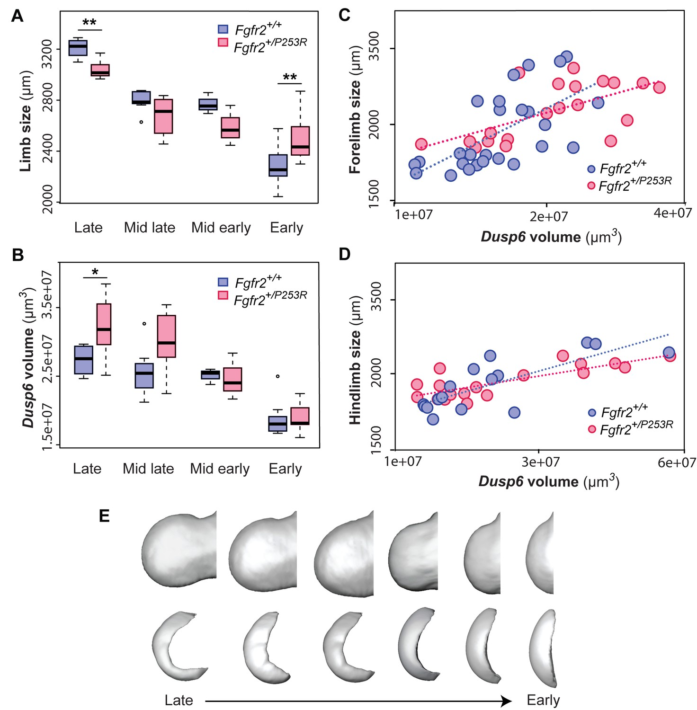 Gene Expression Patterns May Underlie >> Quantification Of Gene Expression Patterns To Reveal The Origins Of