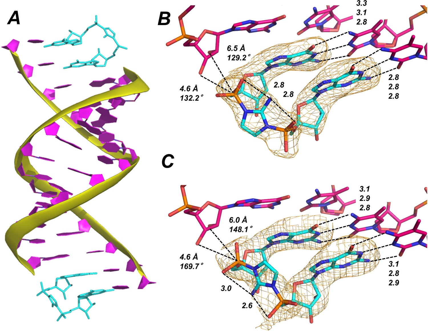 Crystallographic observation of nonenzymatic RNA primer extension