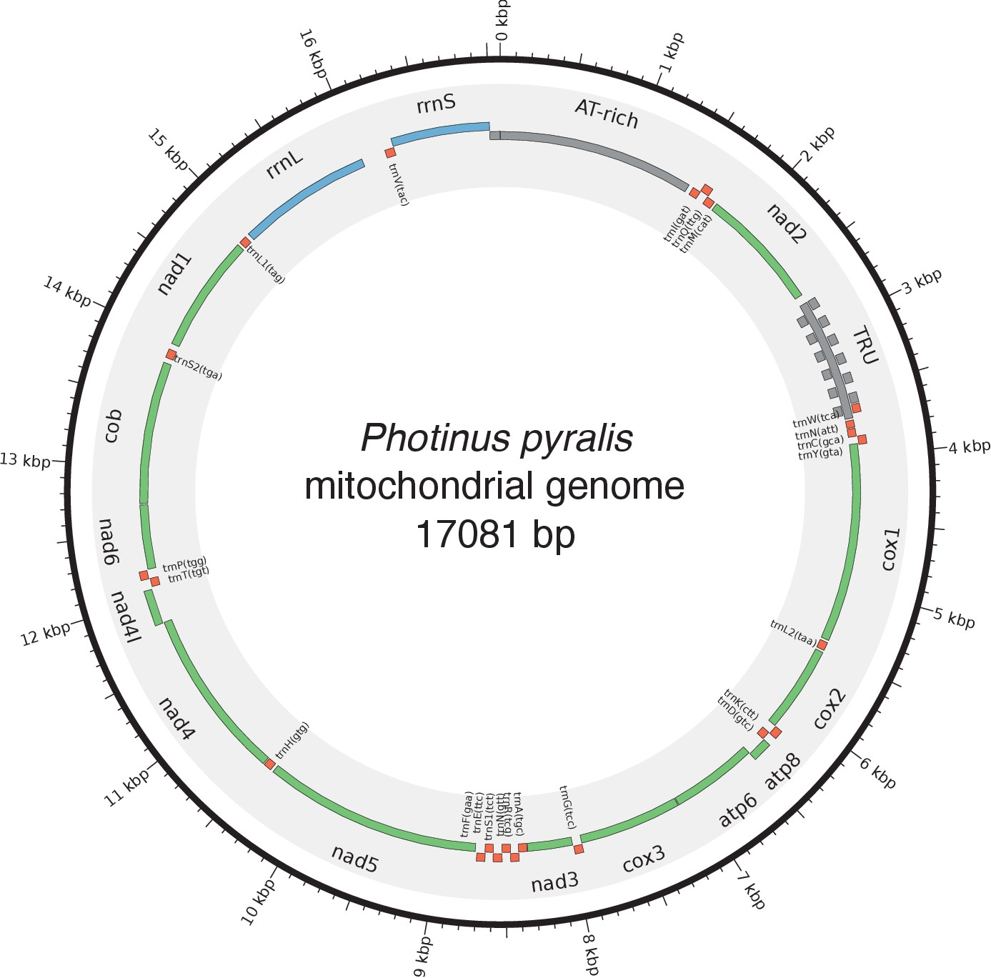 Firefly Genomes Illuminate Parallel Origins Of Bioluminescence In We Want V B The Voltage At Base To Be 06 Higher That Mitochondrial Genome P Pyralis
