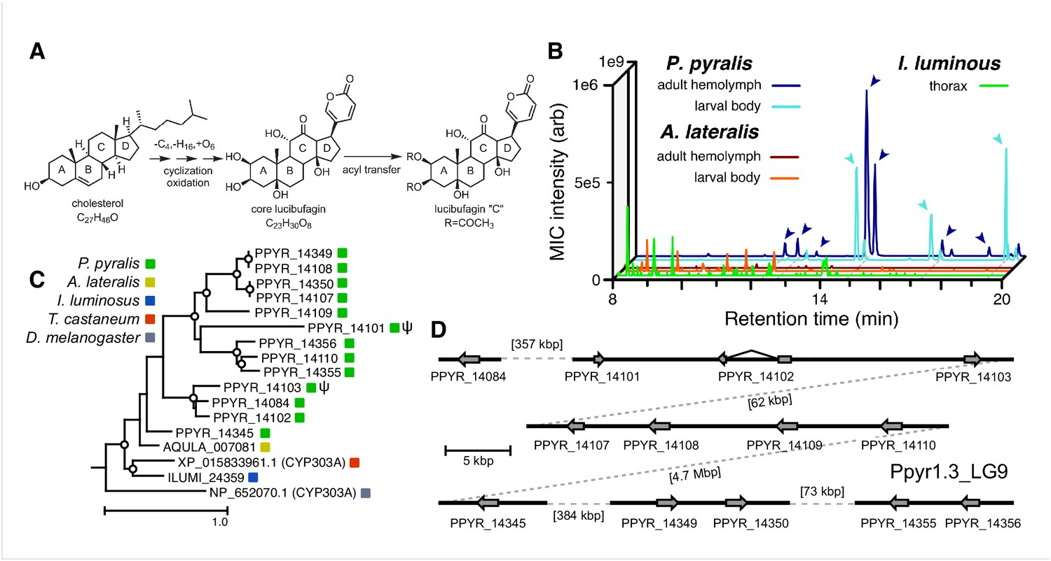 Firefly Genomes Illuminate Parallel Origins Of Bioluminescence In We Want V B The Voltage At Base To Be 06 Higher That An Expansion Cyp303 P450 Family Correlates With Lucibufagin Content