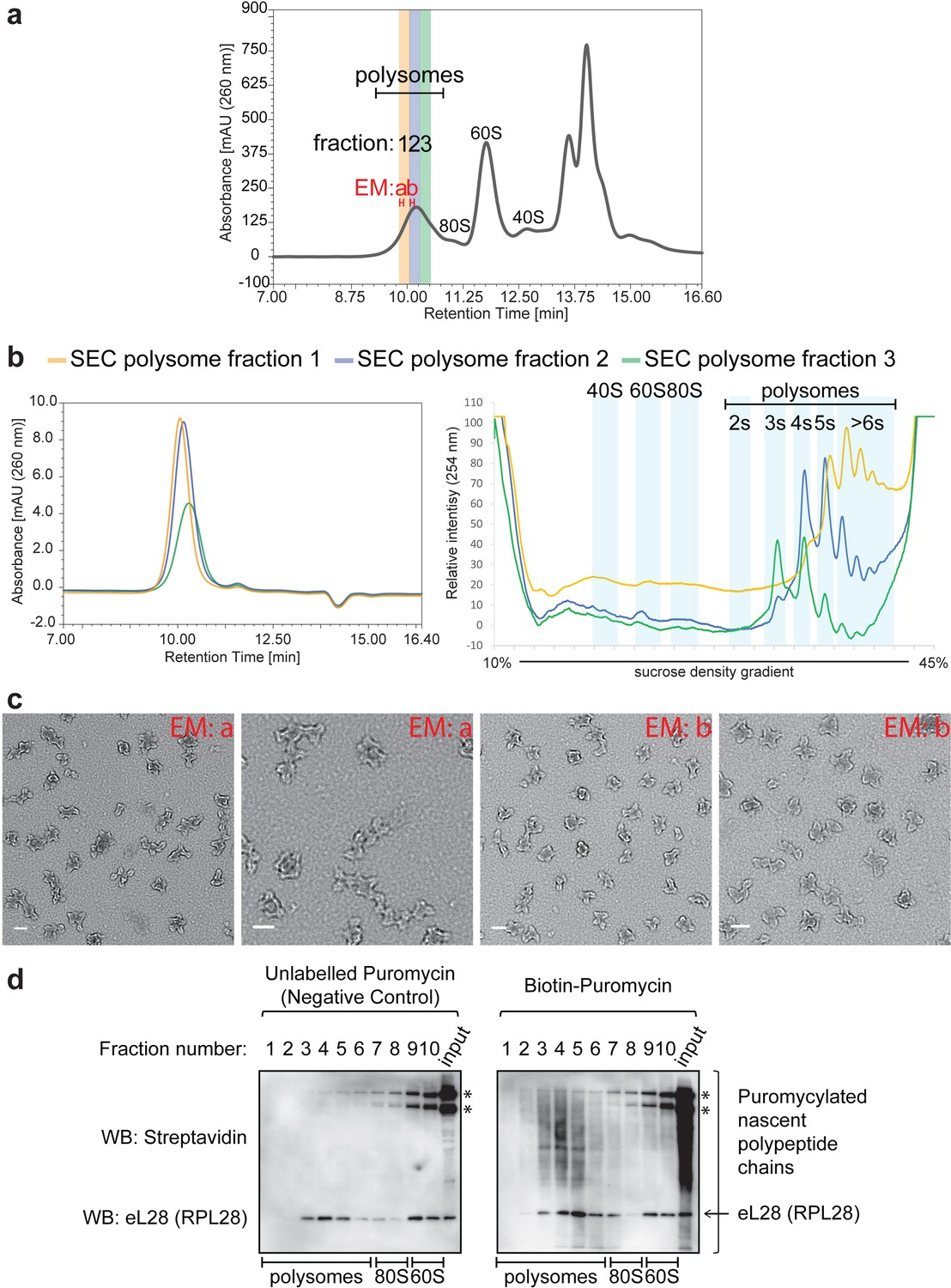 Efficient analysis of mammalian polysomes in cells and