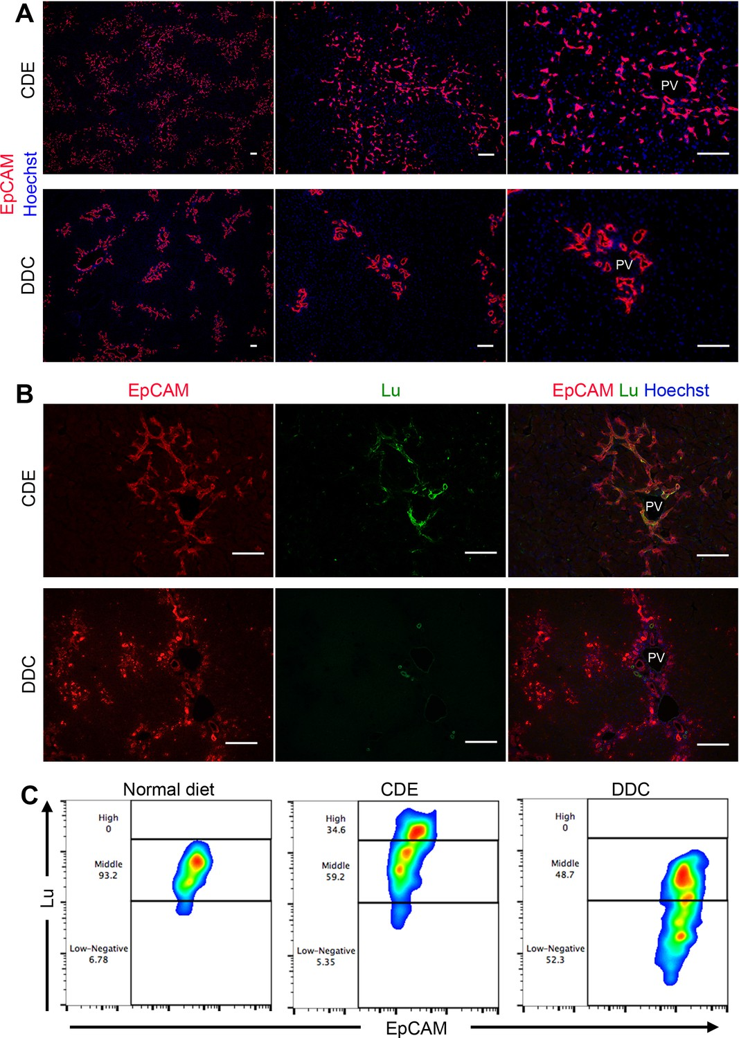Differential expression of Lutheran/BCAM regulates biliary tissue