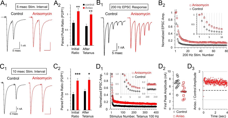 Active presynaptic ribosomes in the mammalian brain, and