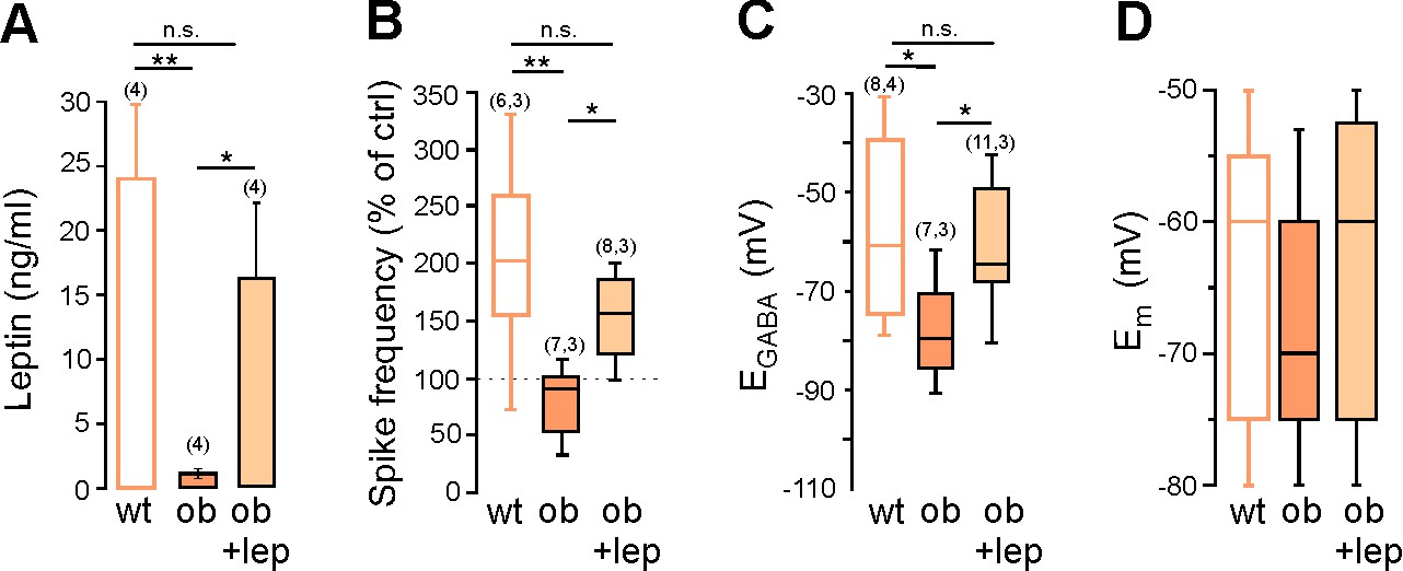 The Adipocyte Hormone Leptin Sets The Emergence Of Hippocampal