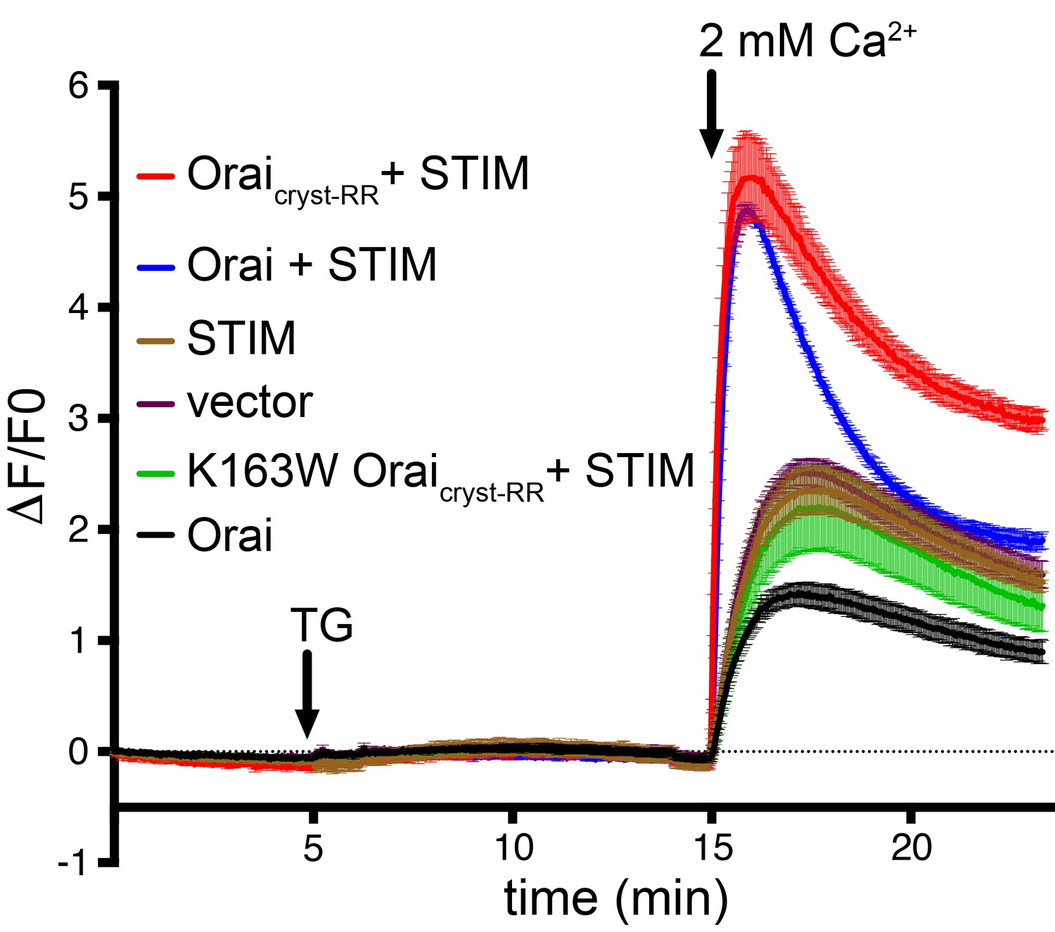 Structures Reveal Opening Of The Store Operated Calcium Channel Orai Led Driver 6 Channels With Phase Shift Control Ca2 Influx Measurements Show That Drosophila Constructs Function As Crac When Co Expressed Stim