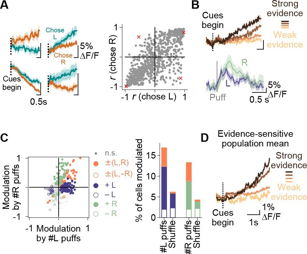 Cerebellar involvement in an evidence-accumulation decision