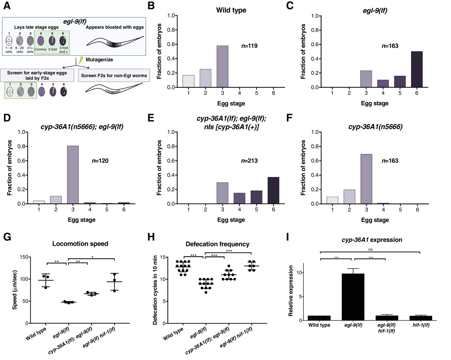 Hypoxia-inducible factor cell non-autonomously regulates C