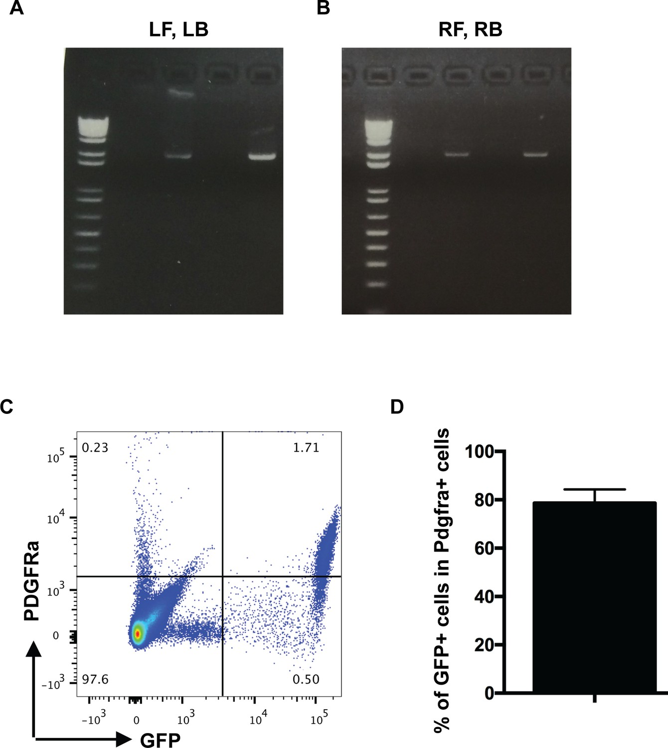 Pdgfra marks a cellular lineage with distinct contributions to