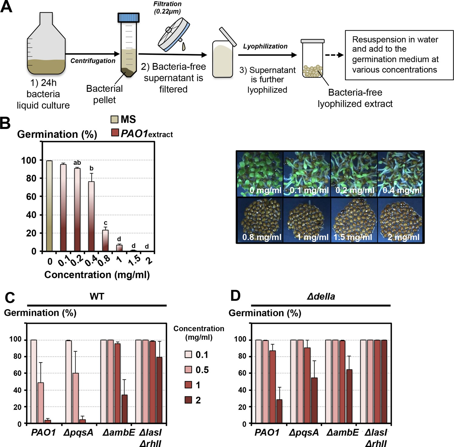 The Plant Pathogen Pseudomonas Aeruginosa Triggers A Della Dependent Seed Germination Diagram Monocot Lyophilized Extracts Of P Liquid Culture Medium Elicit Arrest Responses Similar To Those Observed With In