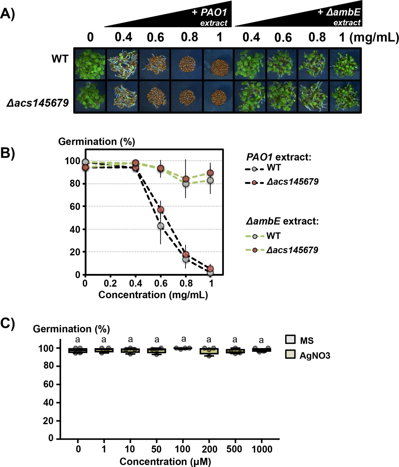 The Plant Pathogen Pseudomonas Aeruginosa Triggers A Della Dependent Germination Diagram It Works From Effect Of Agno3 Pao1 And Ambe Extracts On Seed
