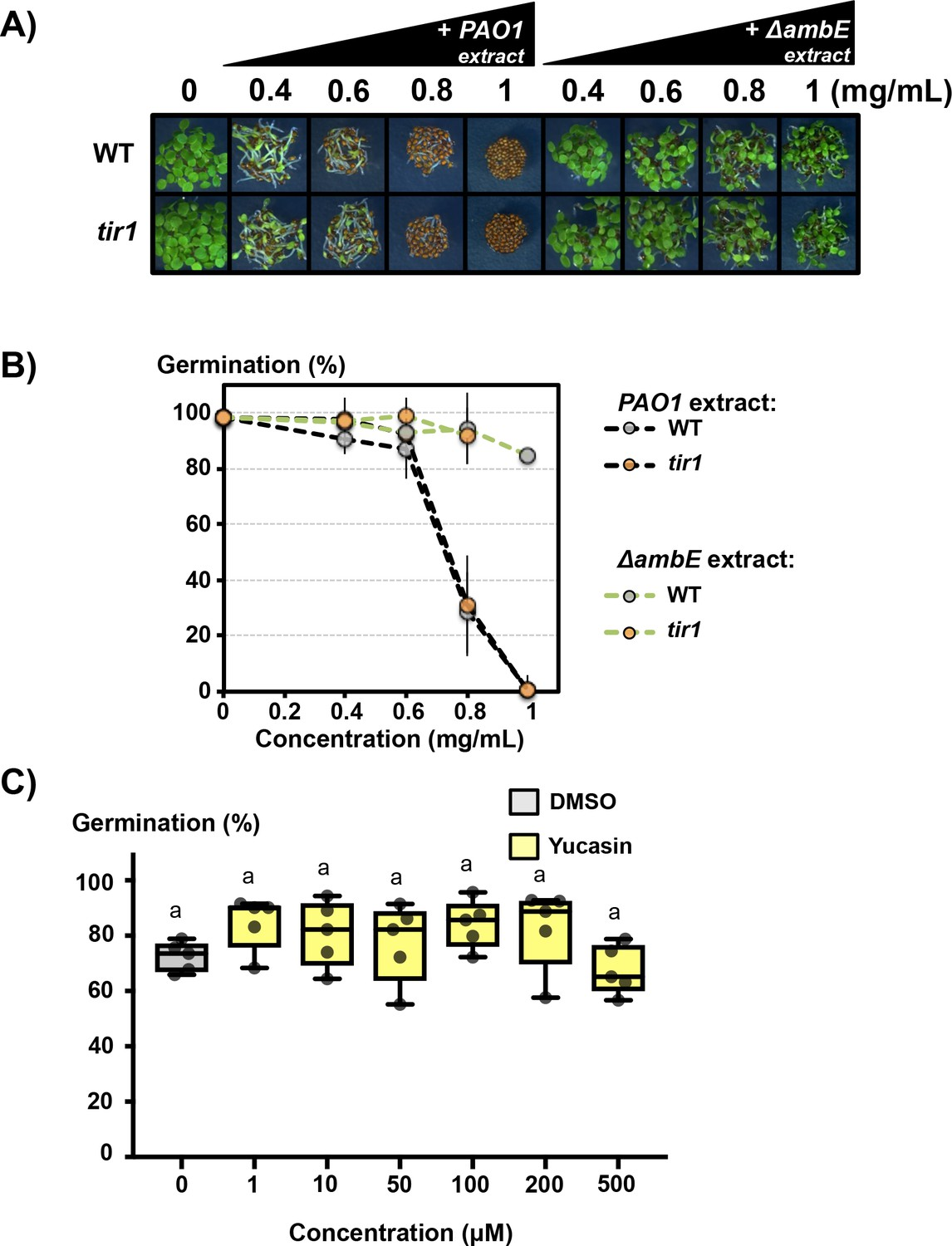The Plant Pathogen Pseudomonas Aeruginosa Triggers A Della Dependent Seed Germination Diagram Inhibitor And Effect Of Yucasin Pao1 Ambe Extracts On