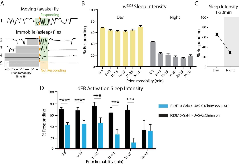 Acute control of the sleep switch in Drosophila reveals a