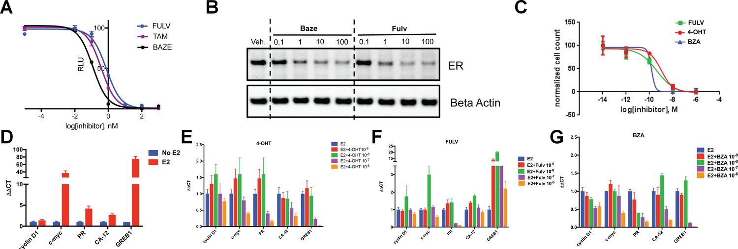 The SERM/SERD bazedoxifene disrupts ESR1 helix 12 to