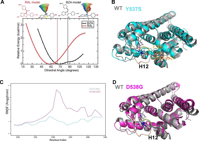 The SERM/SERD bazedoxifene disrupts ESR1 helix 12 to
